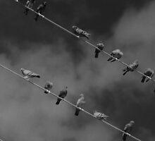 The Birds (plotting their attack) by Scott Mitchell