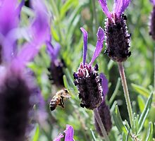 as the bee flys by evvy84