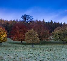 Chatsworth House Autumn Trees by James Grant
