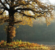 Autumnal fortitude by jchanders
