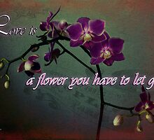 Love is a flower with text by Amar-Images