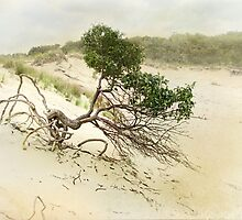 Survival by Kathilee