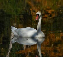 Beautiful Reflections by Shawn Heather McConville