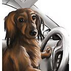 Weenie at the Wheel by Samantha Little