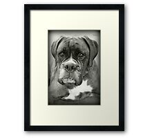 Is That For Me?.... Boxer Dogs Series  Framed Print