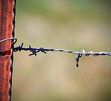 Barbed Wire by Clickography