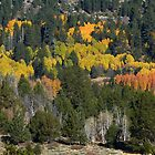 Wall-To-Wall Color - Hope Valley, Alpine County, CA by Rebel Kreklow