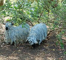 Wire Sheep by Jim Nicholson