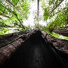 Redwood Cave with Trees by studiojanney