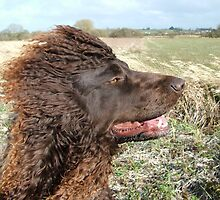 Windswept Water Spaniel by markreynold