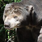 Sun Bear by ScenerybyDesign