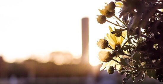 Flower in the sun by Olivier Sohn