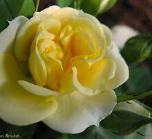 Candy corn rose by MarianBendeth