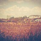 Somewhere in Amol by Katayoonphotos
