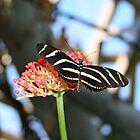 beauty of a butterfly by Lynne Prestebak