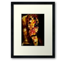 A Corn of A Different Color Framed Print