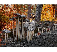 Stay Close Little Children ~ Wild Mushrooms ~ Photographic Print