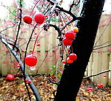 Berry Tree After The Rain 2 by Rebekka Reynolds