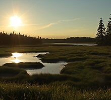 Maine Marsh in the Morning by Emily Klingler