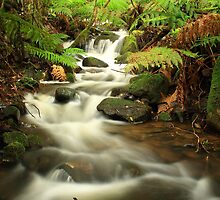 Ferntree Trickle  by phillip wise