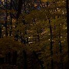 Darkness Falling by Adam Bykowski