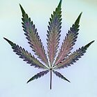 Hemp Lumen #7   Marijuana, Cannabis by FineArtHemp