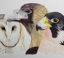 BARN OWL, EAGLE & FALCON by jansimpressions