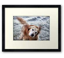 Shake it! Framed Print
