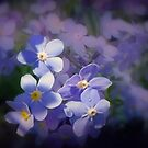 Forget me not'... by Valerie Anne Kelly