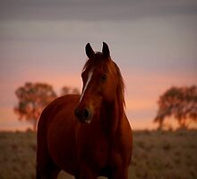 Russet Sunset by kurrawinya