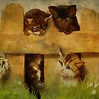Kittens at the Fence by PineSinger