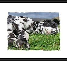 Dalmatian sleeping by caitlin2005