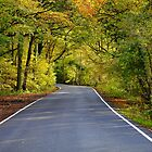 The Colour of Autumn by Stephen J  Dowdell