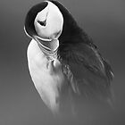 Puffin by Adam Seward