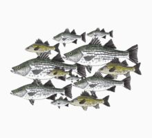 White and Yellow Bass School w/ White background by fishfolkart