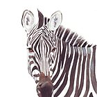 Zebra by Louise De Masi