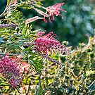Grevillea and Bokeh by jayneeldred