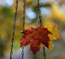 Leaves in Bird Feeder Chain by marybedy