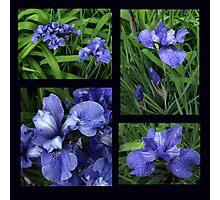 Iris Collage Photographic Print