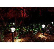 Garden Solar Lights in the Dark Photographic Print