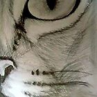 Cats Eye by Becky Pike