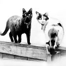 Two cats on a wooden fence by Jan Szymczuk