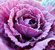 Decorative Fancy Pink Kale by MotherNature