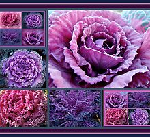 Decorative Fancy Kale by MotherNature2