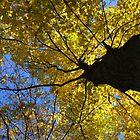 Autumn Leave - Houston Woods Ohio by Tony Wilder