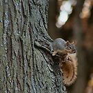 Dainty Squirrel by Keala