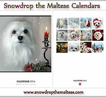 Snowdrop the Maltese Calendars by Morag Bates