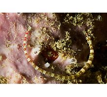Pipefish Circular Photographic Print