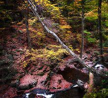 Ricketts Glen Number Ten by Edward Brezinski