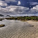 Ned's Beach - Lord Howe Island NSW Australia by Bev Woodman